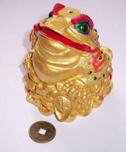 Broasca raioasa a dragostei cu simbol Yin Yang si monede