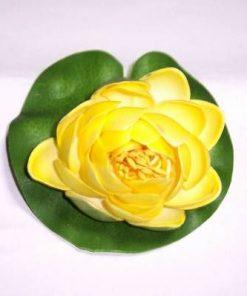 Lotus galben