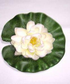 Lotus alb/crem