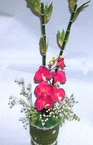 Aranjament Feng Shui cu bambus, orhidee si florile fericirii