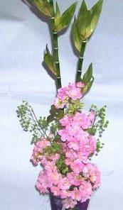 Aranjament Feng Shui cu bambus, flori de mar
