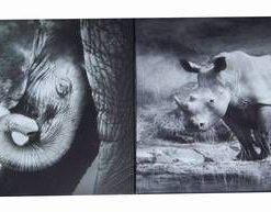 Set de doua tablouri cu rinocer si elefant