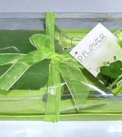 Aranjament Feng Shui verde pentru crestere spirituala